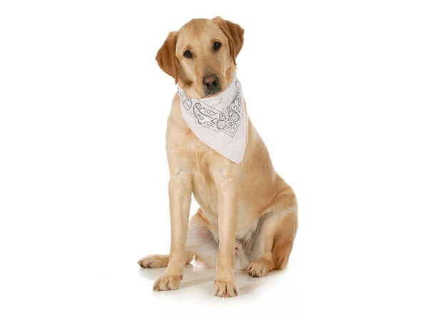 Balec 5-Pack Paisley Cotton Dog Scarf Triangle Bibs  - XL & Washable - Orange