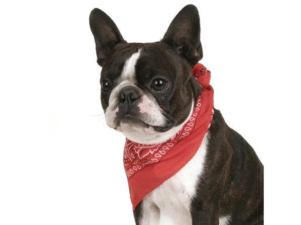 Balec Pack of 2 Paisley Cotton Dog Bandana Triangle Shape  - One Size Fits Most - Grey