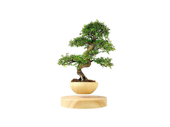 AIRSAI Floating Bonsai Plant Pot