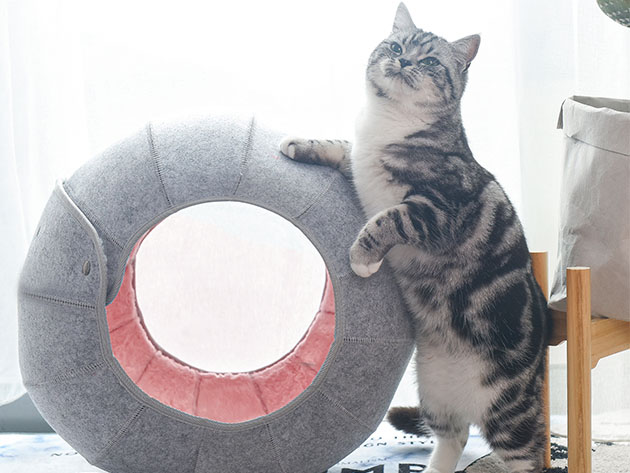 Get the Dragon Ball Cat Cave for $26.39 with promo code CMSAVE20