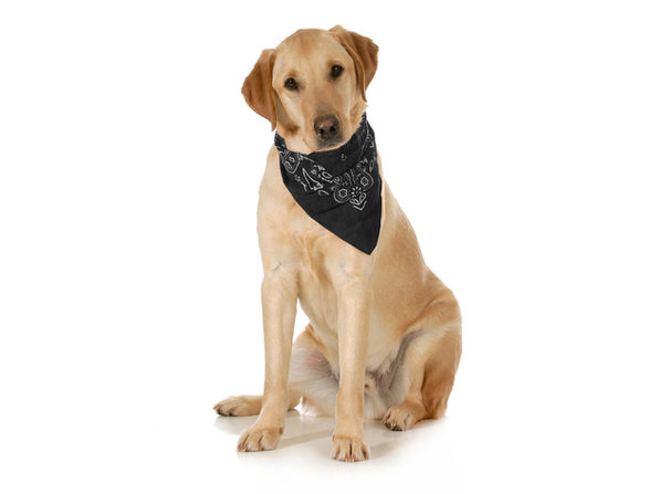 5-Pack Paisley Cotton Dog Scarf Triangle Bibs  - XL and Washable - Blue