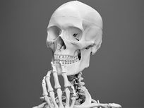 Introduction to the Skeletal System - Product Image