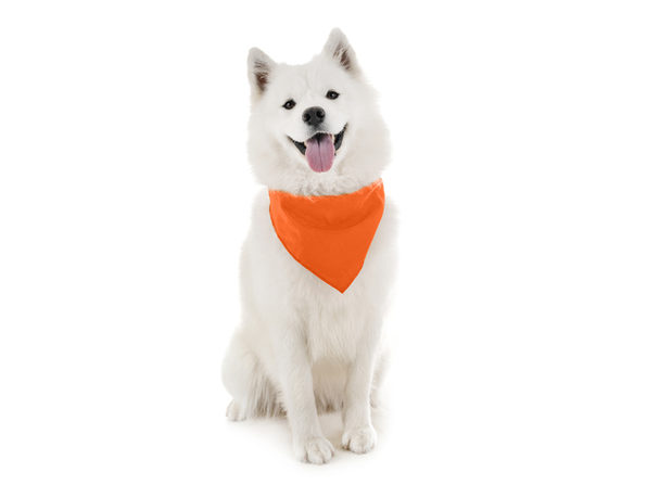 Dog Bandanas - 6 Pack - Scarf Triangle Bibs for Small, Medium and Large Puppies, Dogs and Cats - Orange