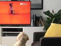 Lifetime of DogTV - Product Image