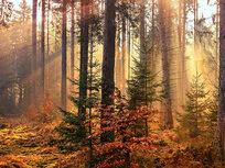Beginner Landscape Editing with Matt Kloskowski - Product Image