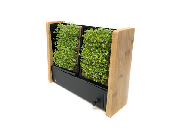 EcoQube Frame With 1 Broccoli + 2 Arugula Seed Packs