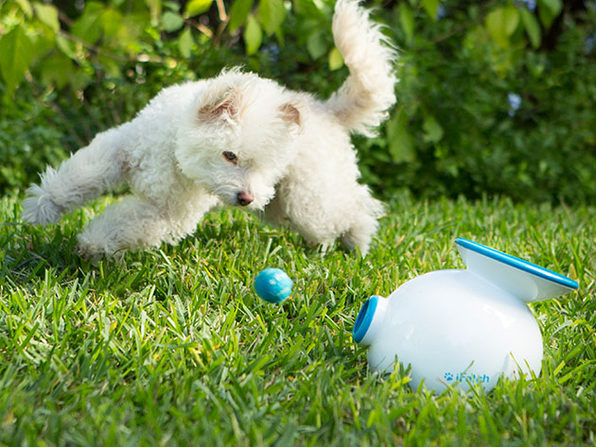 iFetch: Automatic Ball Launcher for Dogs
