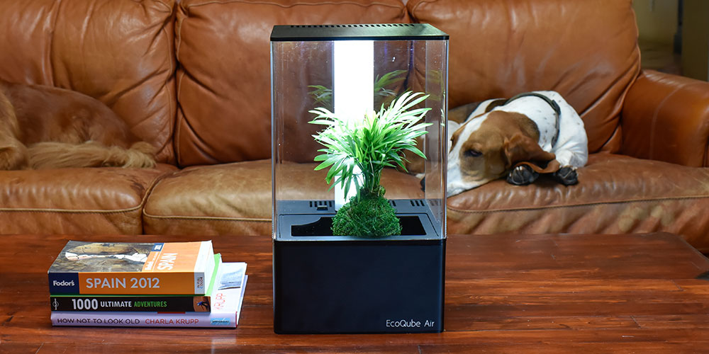 EcoQube Air Desktop Greenhouse